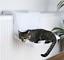 Dog-Cat-Radiator-Bed-Warm-Faux-Fur-Kitten-Basket-Cradle-Hammock-Puppy-Animal-Pet thumbnail 8