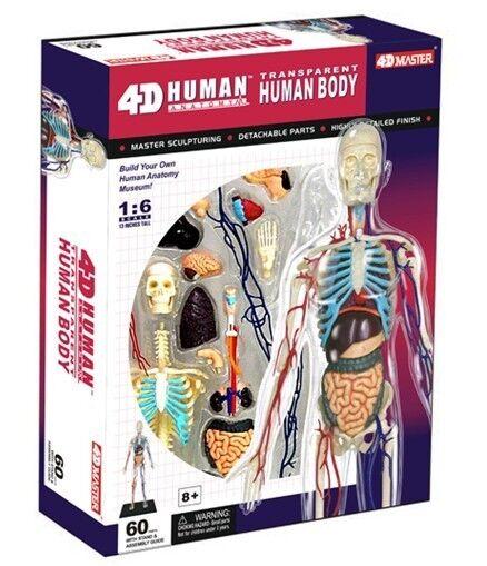Nuevo Rompecabezas 4D Anatomía humana Modelo 3D Cuerpo Completo Transparente órgano Torso Esqueleto