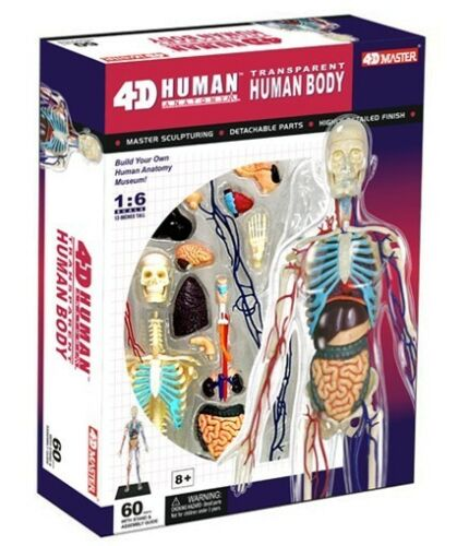 4d puzzle human anatomy 3d model transparent full body skeleton, Skeleton