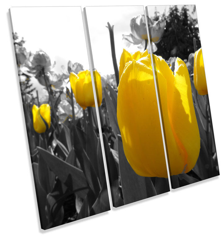 Tulips Floral Flowers TREBLE CANVAS WALL ART Square Picture Print