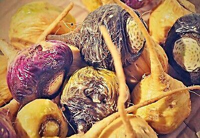 Maca Seme Ginseng Peruviano Lepidium Meyenii Semi Maca Semi