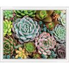 Pink Picasso Sensitive Succulents Kit & Frame Paint-by-Number Kit