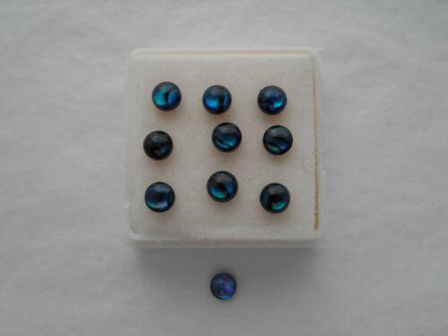 Coquille d/'Haliotide Cabochons 4 mm Rond Coupe bleu cabochon