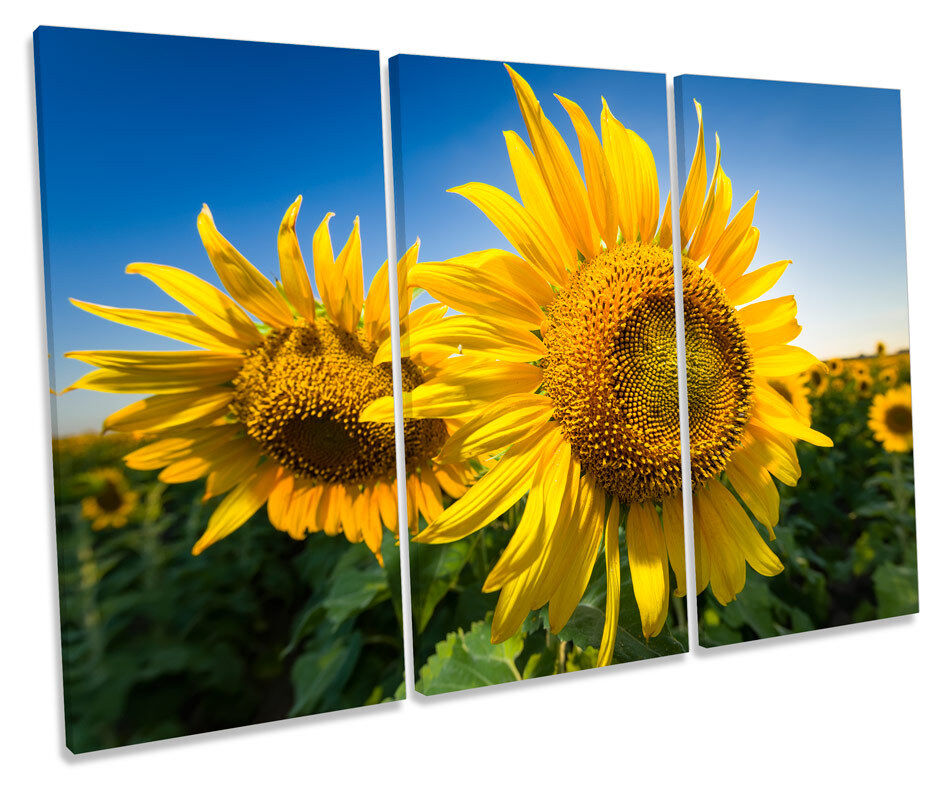 Sunflower Floral Scene TREBLE CANVAS Wand Kunst Box Framed Bild