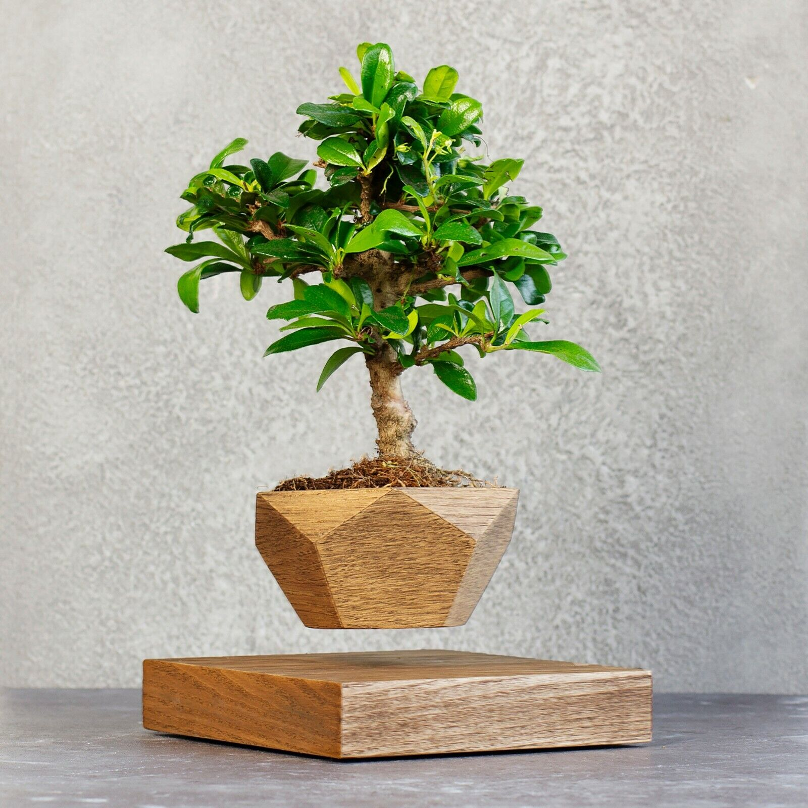 Levitating Bonsai Wooden Pot Walnut For Sale Online