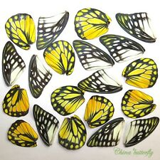 32 pcs REAL BUTTERFLY wing jewelry butterfly material ooak fairy DIY artwork #16