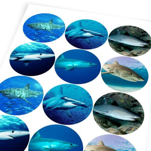 Sharks Sticker Labels Children Teacher Praise Parent School
