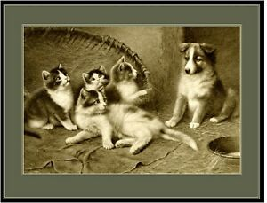 English Picture Art Print Collie Shepherd Pup Dog Cat Puppy Puppies Dogs Poster