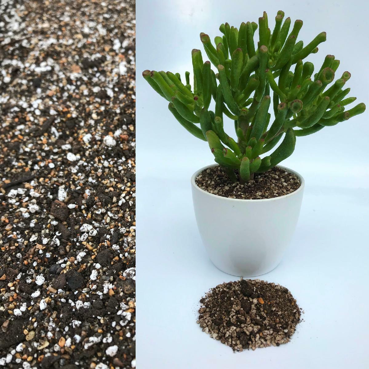 Organic Potting Mix Compost with Perlite for Cactus Succulent House Plant Pot 1L