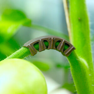 BIO-Rispenbügel für Tomaten und Paprika (kompostierbar)
