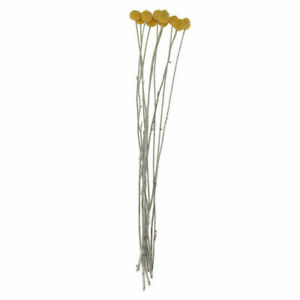 10x-Dried-Flowers-Branch-Festival-Yunnan-Bouquet-Yellow-Billy-Balls-Home-Decor