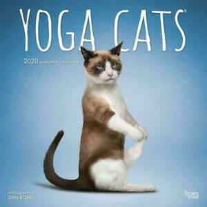 Yoga-Cats-2020-Square-FOIL-Wall-Calendar-by-Browntrout-an-Ideal-Gift-FREE-POST