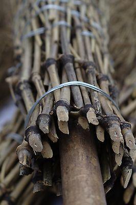100 Bambus - Besen Hofbesen Pferdebesen Strauchbesen Hexenbesen Reisigbesen Reis Auf Dem Internationalen Markt Hohes Ansehen GenießEn