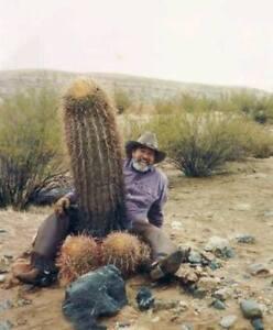 Para-hombres-camiseta-senoras-gracioso-hombre-nos-bolas-Planta-de-Cactus-finja-el-pene-Vaquero