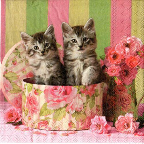 SERVIETTES EN PAPIER CHAT CHATONS BOITE A FLEURS.PAPER NAPKINS CAT KITTEN IN BOX