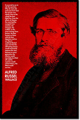 ALFRED RUSSEL WALLACE ART QUOTE PRINT PHOTO POSTER GIFT THEORY OF EVOLUTION