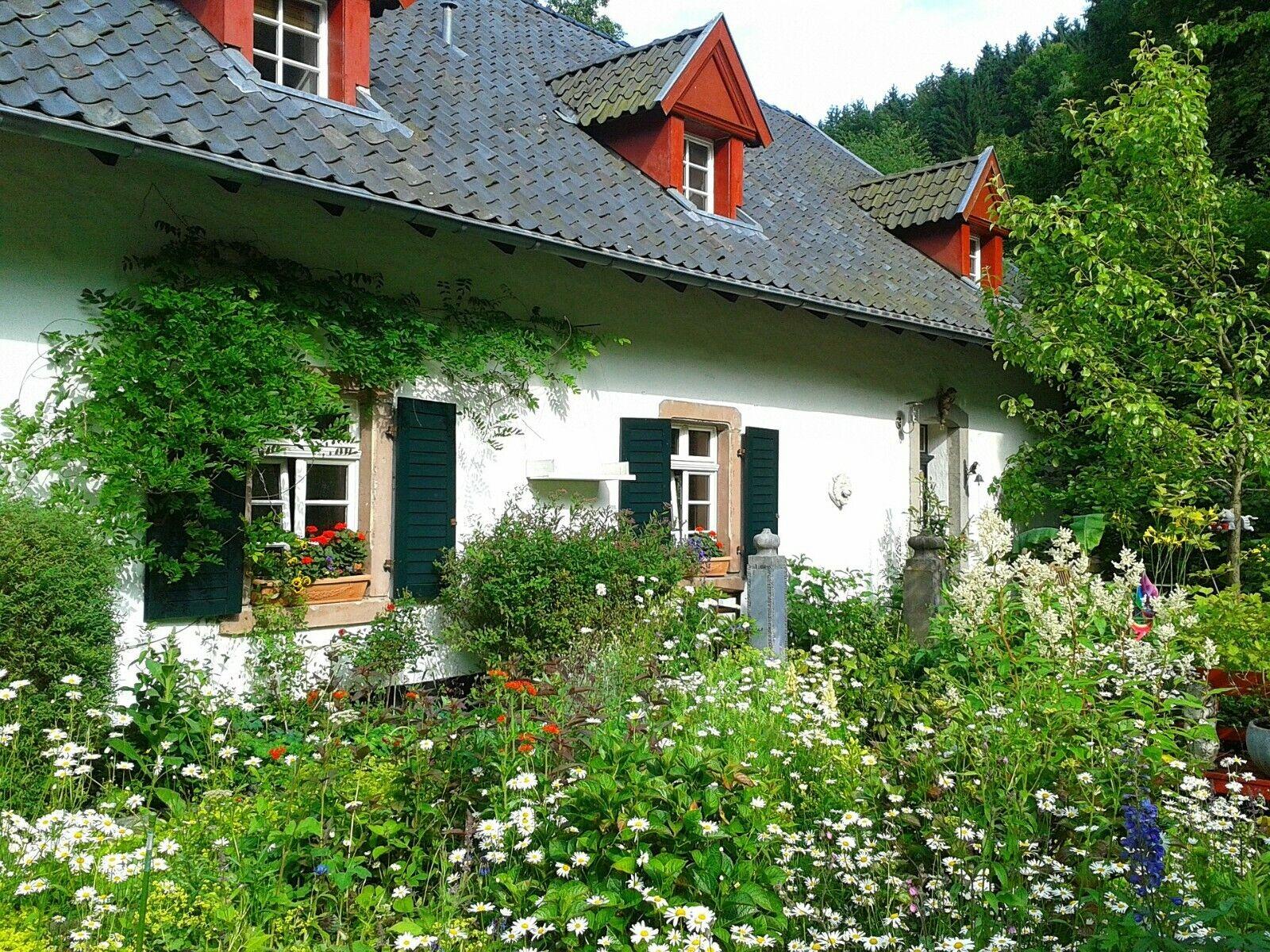 Flower Cottage Garden Mix 250+ Seeds - Throw & Grow - 7 Different Flowers