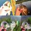 5x-de-haute-qualite-leurres-grenouille-Leurre-Crankbait-Hooks-Bass-Bait-Tackle-Nouveau miniature 3