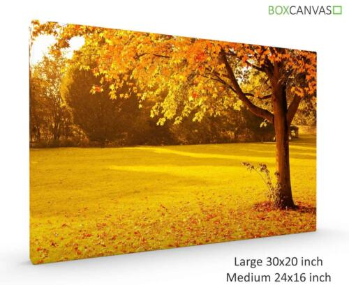 FOUR SEASONS 9 YELLOW AUTUMN PHOTO CANVAS