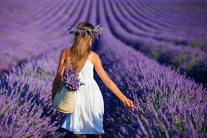 200Pcs-Aromatic-Lavender-Flowers-Seeds-Beautiful-Best-Fragrance-In-Your-Home