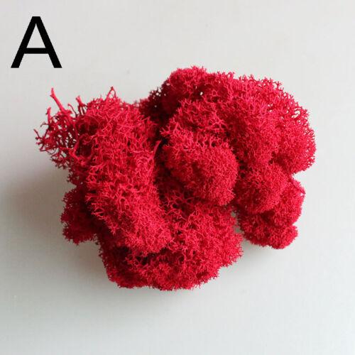 Natürliche Rentiermoos konservierte künstliche Blume Hochzeit Hausgarten Dekor