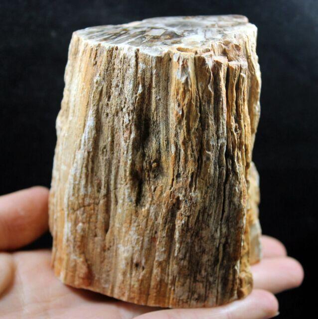 787g POLISHED PETRIFIED WOOD FOSSIL AGATE BRANCH Crystal Madagascar