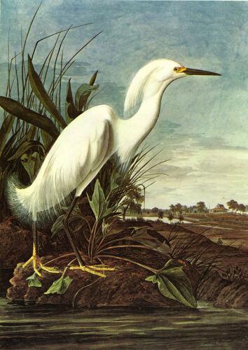 nevado Egret John James Audubon Art Print//cartel