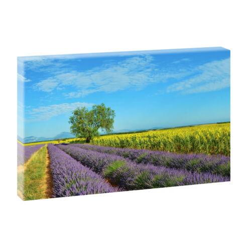Lavendelfelder  Bilder Keilrahmen  Poster Leinwand  Natur  XXL 100 cm*65 cm 504