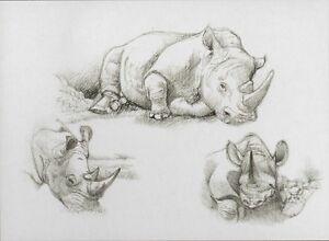 f562100f86f3 Details zu Sketching - Skizzieren - Malen mit Bleistift - Nashorn - Afrika  30 cm x 40 cm