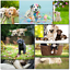 thumbnail 2 - Doodlecards Pack of 10 Standard Size Dog Lovers Birthday & Blank Cards