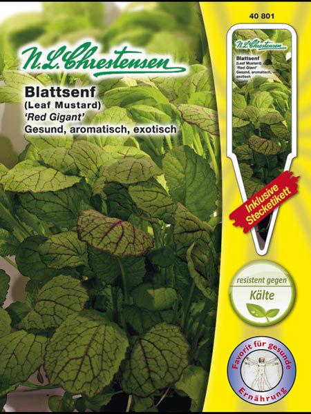 Blattsenf 'Red Gigant' - Brassica juncea, Asia-Salat Samen Saatgut 40801