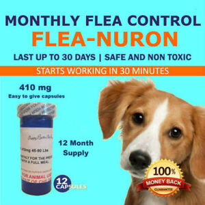 1-Year-Supply-MONTHLY-Flea-Control-For-Dogs-45-90-Lbs-410-Mg-PB-12-Capsules