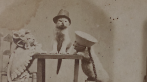 Stereoview-Photo-Kittens-A-Sitting-Of-The-High-Commission-Rare-Cats-Dressed-Up
