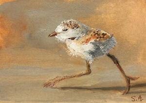 "Print baby sea bird shore beach ocean miniature art ""RUN!"" Piping Plover Chick"