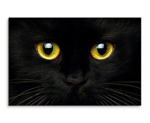 Schwarze Katze Mit Gelben Augen Wandbild Auf Leinwand In