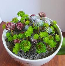 Artificial Flower Mini Grass Lotus Succulent Plant Fairy Yard Decor #8 Green