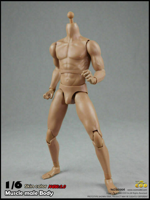 COOMODEL 1//6 scale Muscular Male Figure Body BD009 BD010