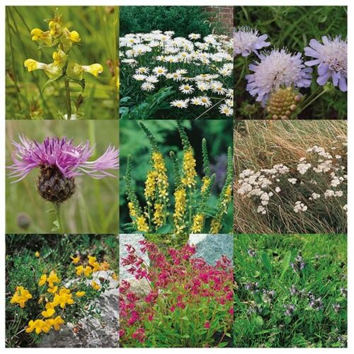 Wildflower Semences-lourd Clay Soil Mix 25 GMS