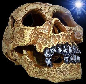 Aquarium Deko Totenkopf Totenschadel Terrarium Dekoration Skull Hohle Ebay