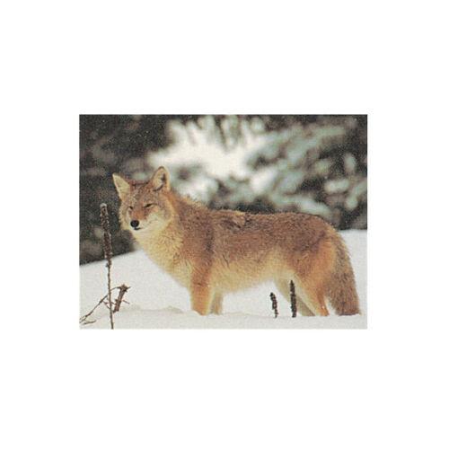 DELTA La vraie vie papier Tir à L/'Arc Cible coyote-Unique