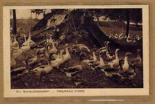 Cpa Alsace Schalckendorf - troupeau oie wn0204