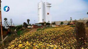 Se vende terreno de 5900 m2 en Playas de Rosarito