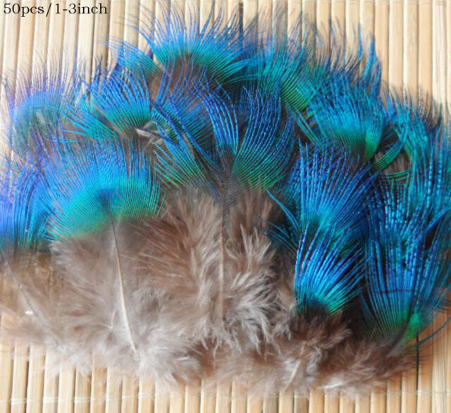 50pcs beautiful natural pheasant  Peacock blue feather 1-3 inch/2#