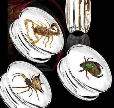 Bug Encased Resin Plugs - Scorpion, Beetle, Spider, 16mm,18mm,20mm,22mm,24mm