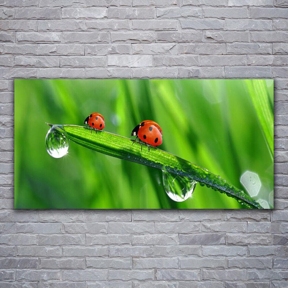 Verre Imprimer Wall Art Image 120x60 Photo Coccinelle Motif Fleuri