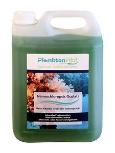 Plancton Vital Phytoplancton Nannochloropsis Oculata Pour Plancton Coloré 5l