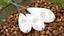 Korda Karpfenangeln Neu Interceptor Oberfläche Regler Schwimmer Alle Größen