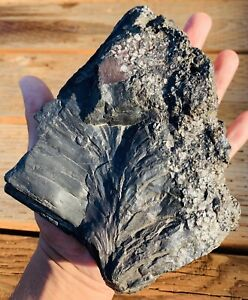 Massive *MAGNETIC*  Stony Iron *WITNESSED* Meteorite Mesosiderite