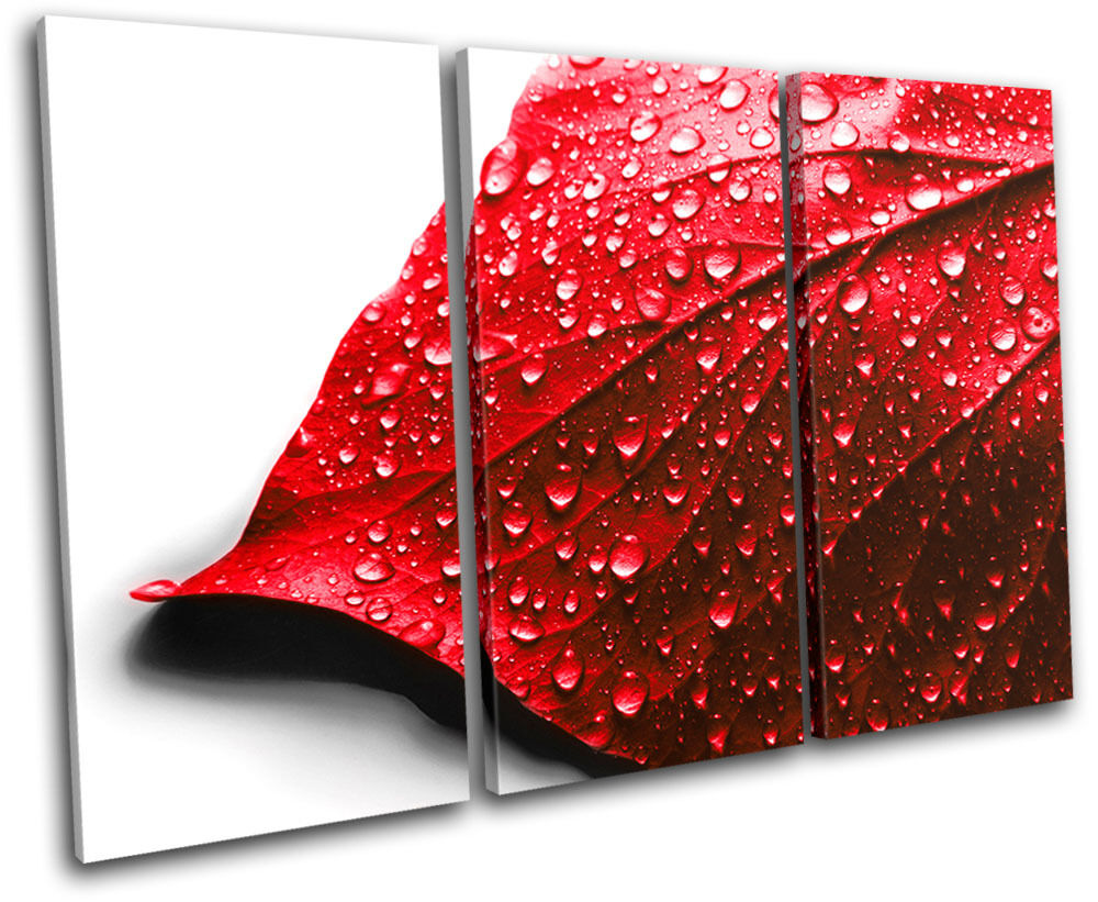 Leaf Water Drops Floral TREBLE Leinwand Wand Kunst Bild drucken