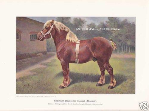 """Belgischer Hengst Belgier /""""Nimbus/"""" Farbdruck von 1925 Reprint"""